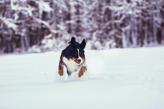 The good dog running along park Free Photo