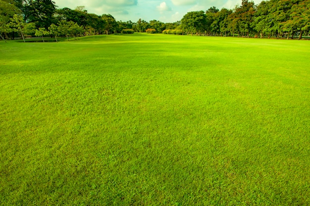 Good Environment Green Grass Ground Photo