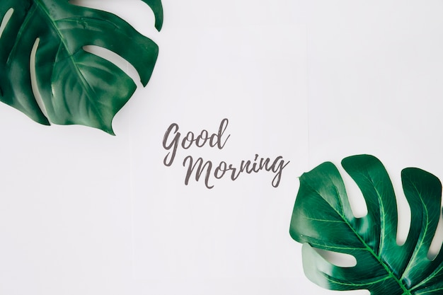 Good morning text on paper near the swiss cheese leaf against white background Free Photo