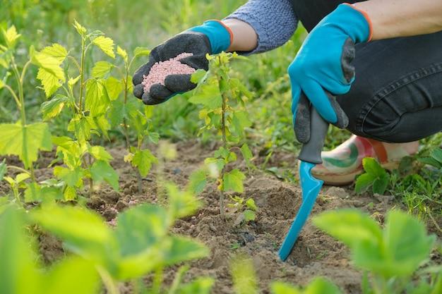 Гранулы удобрения в руках женщины садовника Premium Фотографии