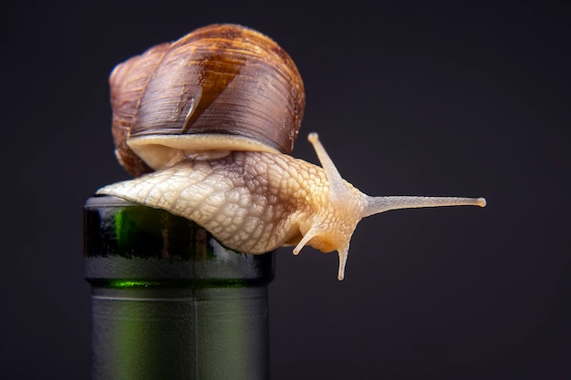 Grape snail on a bottle on a dark. mollusc and invertebrate. gourmet protein meat food. Premium Photo
