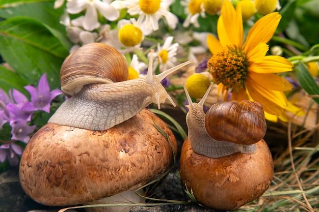Виноградные улитки сидят на грибах в природе. моллюски и беспозвоночные. Premium Фотографии