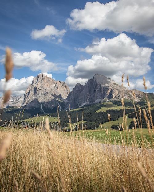 草とコンパチュイタリアのplattkofel山 無料写真