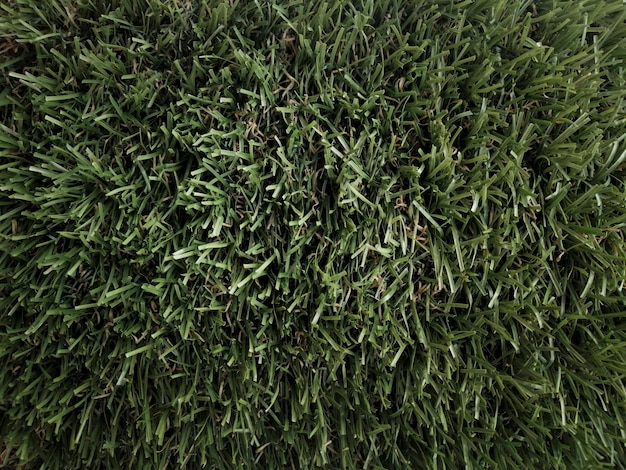 Grass bottom seen from above Free Photo