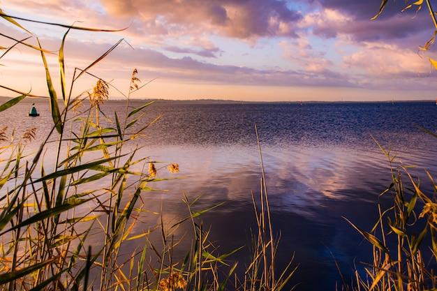 夕焼け空と海の体の草の枝 無料写真