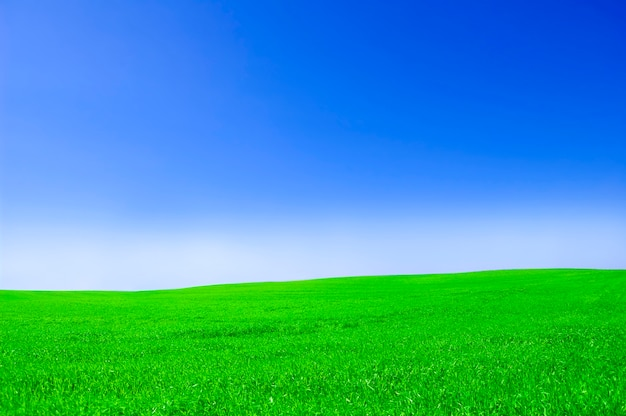 Grass Field Photo