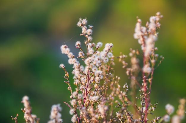 草の花と日差し Premium写真