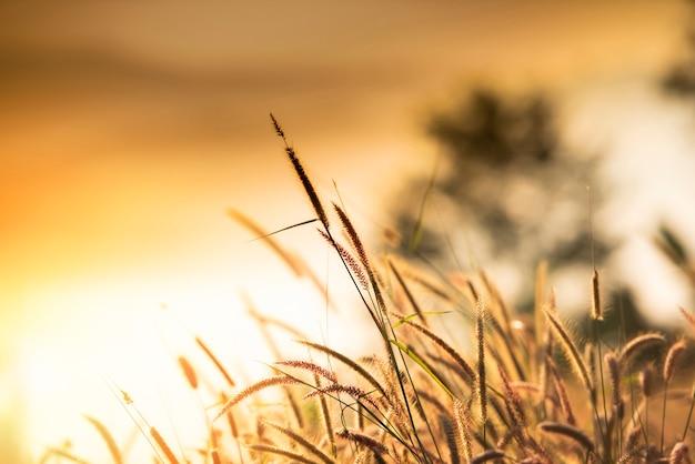Трава цветок туманный пейзаж лес утро красивый восход солнца туман с растением Premium Фотографии