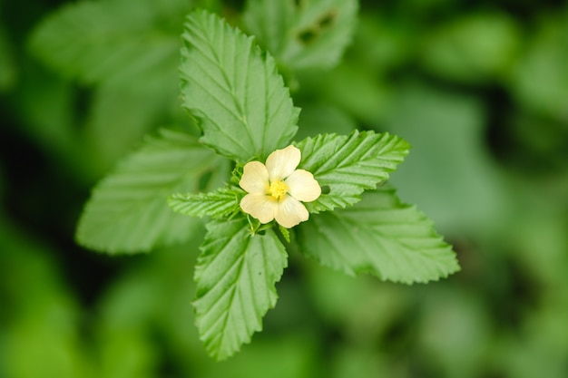 Grass flowers bloom in nature Premium Photo