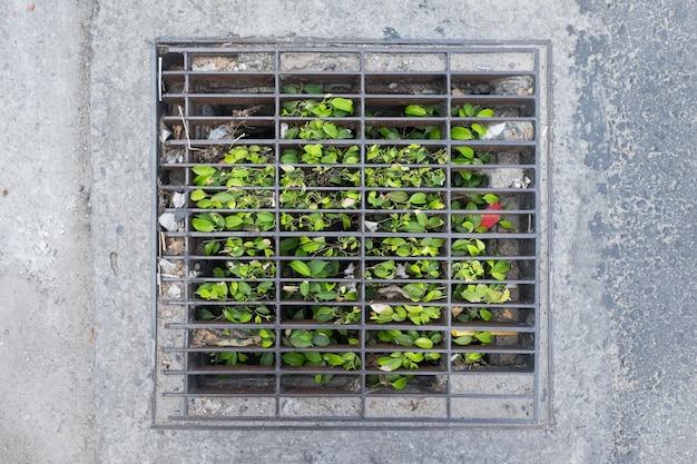 運河化または下水道ハッチを通じて成長する草。 Premium写真