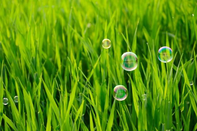 Трава лугов и мыльные пузыри Premium Фотографии