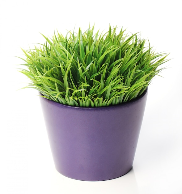 Grass in pot Free Photo