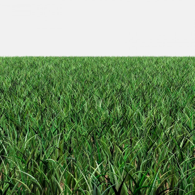 Grass skyless Free Photo