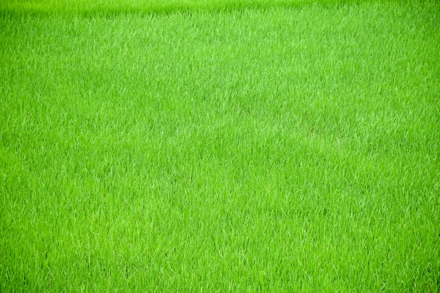 Grass texture photo free download - Cesped artificial sobre tierra ...
