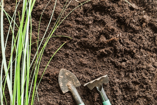 Grass with gardening fork and shovel on soil Free Photo