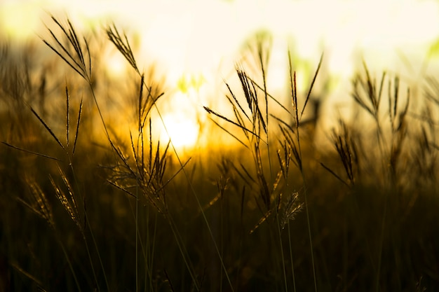 Grass with a warm light in the morning. Premium Photo