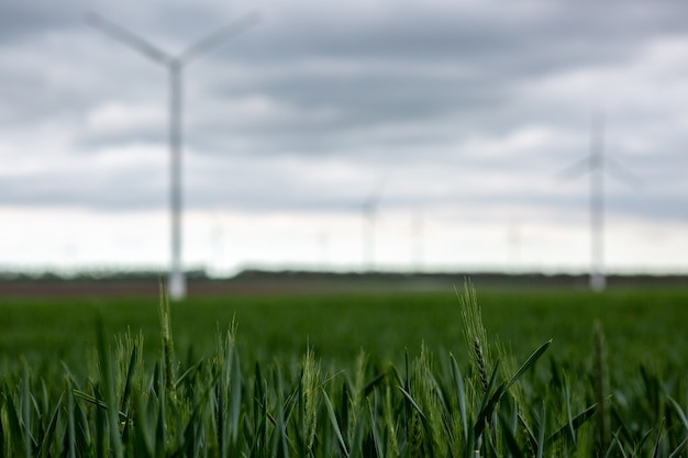 Grass with white windmills under a cloudy sky on a blurry background Free Photo