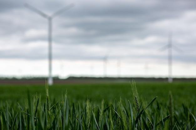 Трава с белыми ветряными мельницами под пасмурным небом на размытом фоне Бесплатные Фотографии