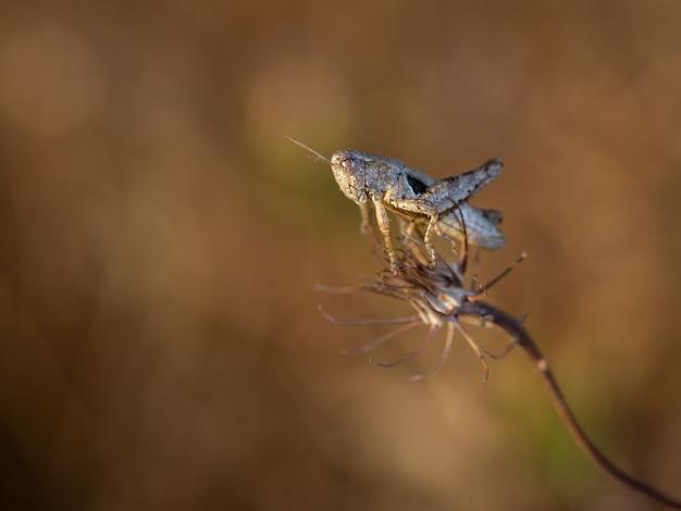 Кузнечик в естественной среде обитания. макро фотография. Premium Фотографии