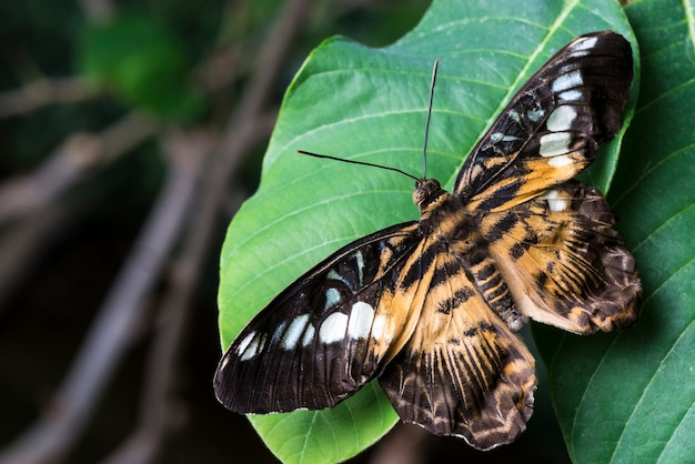 Grassland butterfly on leaf close up Free Photo