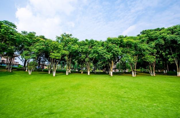 Grassland landscape and greening environment park background Free Photo