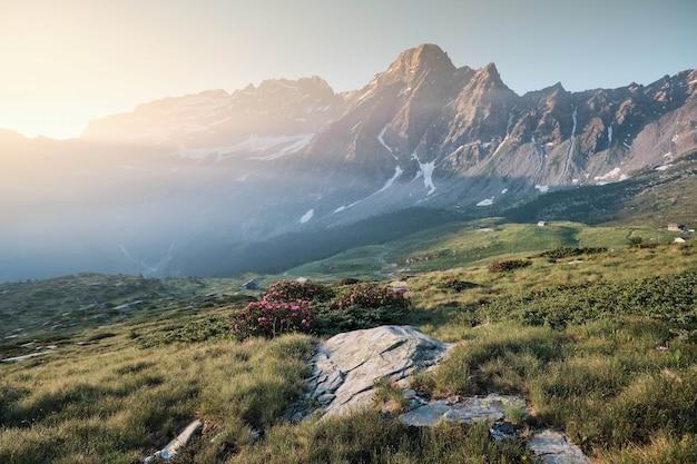 꽃과 산이있는 잔디 언덕 무료 사진
