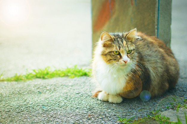 A gray brown white fluffy cute domestic cat in the outdoor or park, tonned photo Free Photo