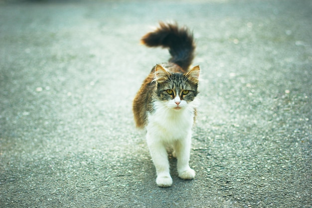 A gray brown white fluffy cute domestic cat in the outdoor or park Free Photo