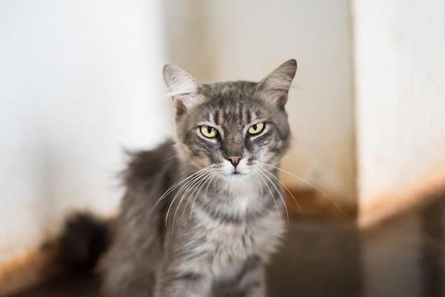 楽しみなさい灰色の猫 Premium写真