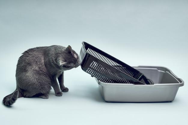 Cat Litter Images | Free Vectors, Stock Photos & PSD
