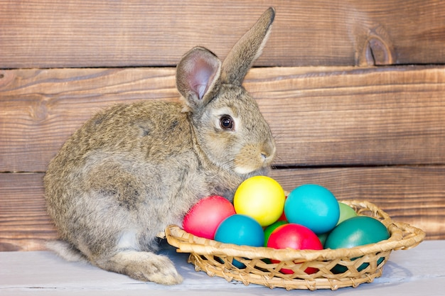 Gray rabbit with a basket of easter eggs on the background of wooden boards, the concept for the holiday of easter Premium Photo