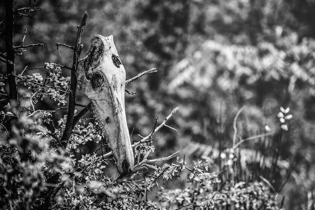 Colpo di messa a fuoco selettiva in scala di grigi di un teschio animale posto sopra ramoscelli Foto Gratuite