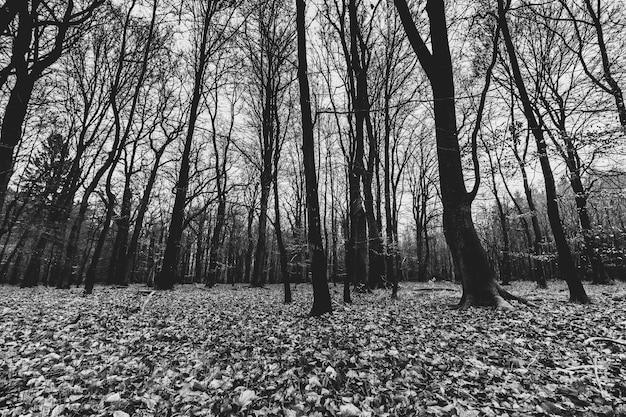Снимок жуткого леса в оттенках серого Бесплатные Фотографии