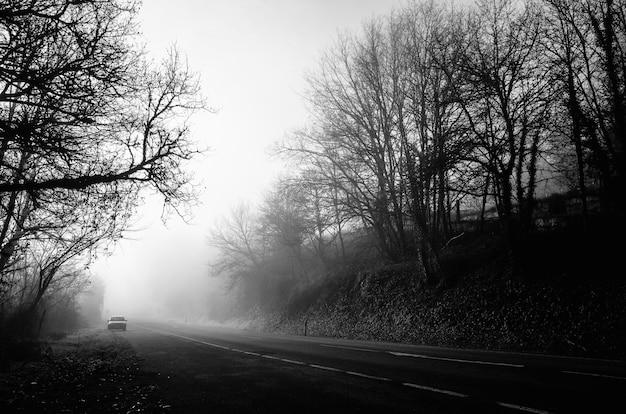 霧のある葉のない木の真ん中にある道路のグレースケールショット 無料写真