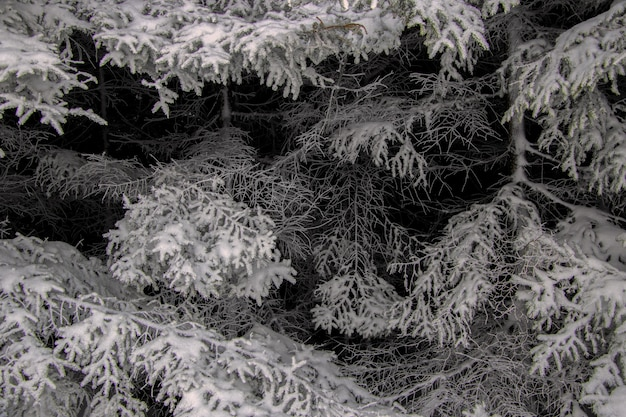 冬に雪に覆われた木のグレースケールショット 無料写真