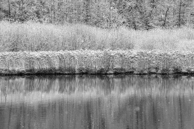 Colpo in scala di grigi di piante coperte di neve vicino a un'acqua Foto Gratuite
