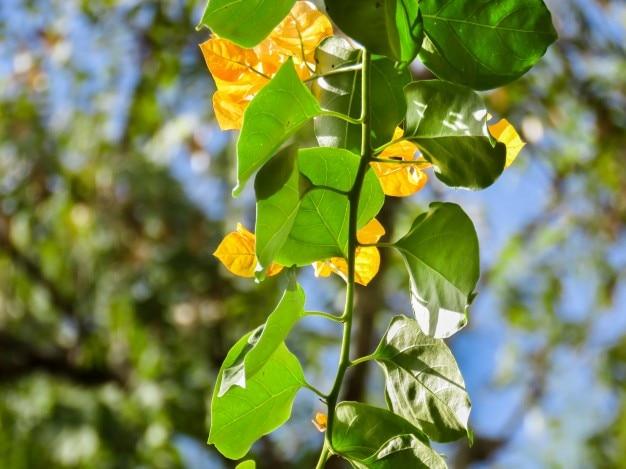 緑と黄色の葉 無料写真