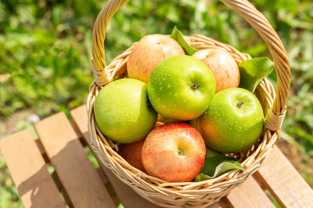 Green apple in wicker basket on wooden table green grass in the garden harvest time rustic style Premium Photo