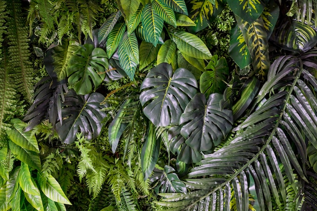 Green background concepts.tropical palm leaves, jungle leaf close up.beautiful tropical leaves background, texture green floral card for design.monstera green tropical leaves Premium Photo