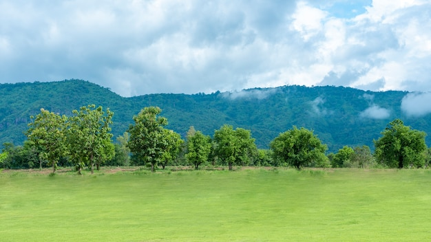 Green backyard with mountain and blue sky Premium Photo