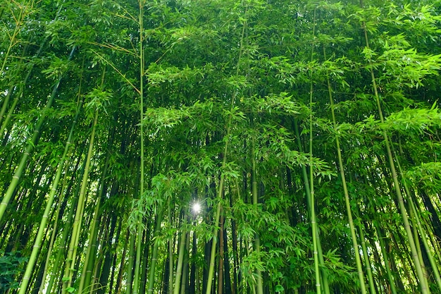 Green bamboo leaves background material. bamboo forest. Premium Photo