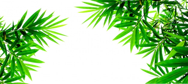 Green bamboo leaves isolated on white background Premium Photo