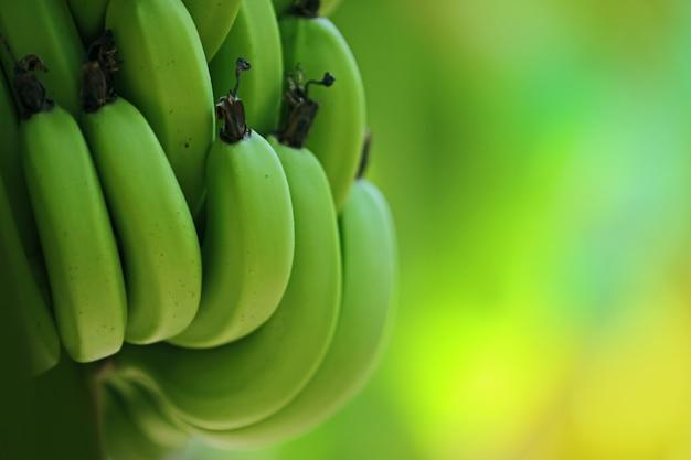 Green banana Premium Photo