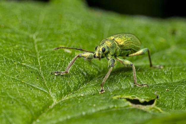 Зеленый жук сидит на листе Бесплатные Фотографии