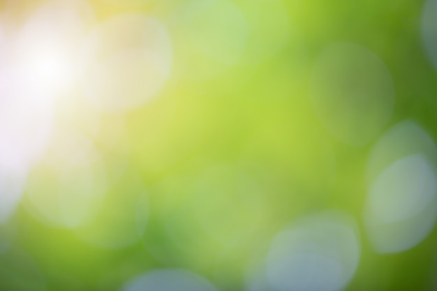 Green bokeh on nature blur background. element of design. Free Photo