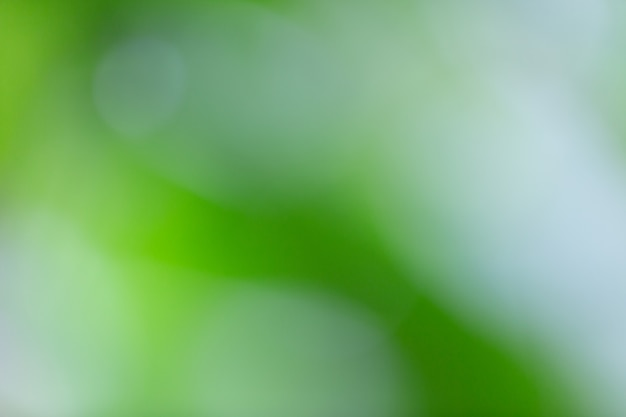 Green bokeh on nature blur. element of design. Free Photo