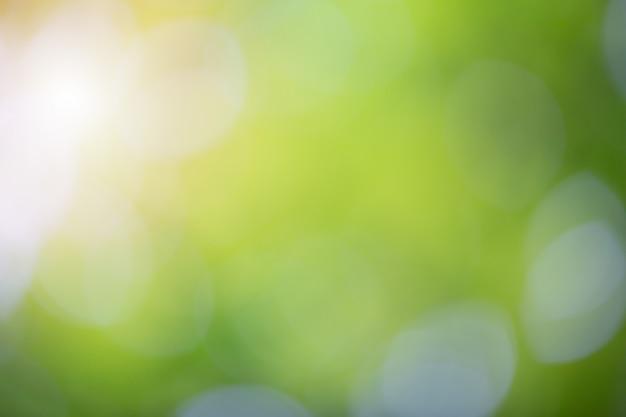 자연에 녹색 Bokeh 배경 흐림. 디자인의 요소. 무료 사진