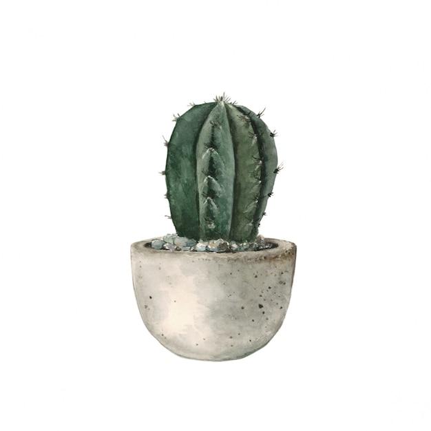 Green cactus in a concrete pot Premium Photo