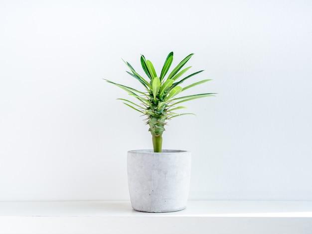 Green cactus in concrete pot. Premium Photo