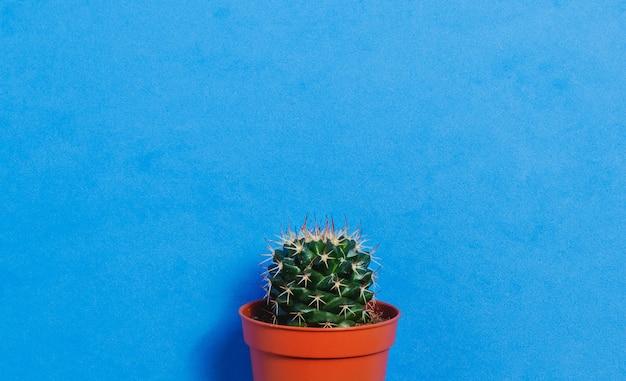 Green cactus in pot on blue pastel color background Premium Photo